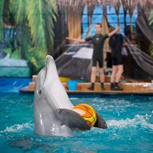 Дельфинарии, океанариумы Тишково