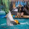 Дельфинарии, океанариумы в Тишково